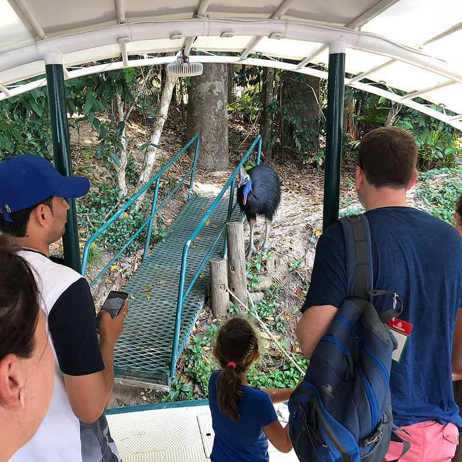 Paradise Guided Rainforest Walk Kuranda