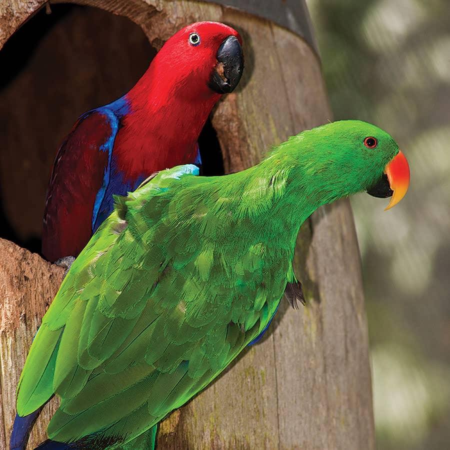 Birdworld Kuranda